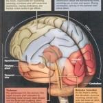 méditation et science